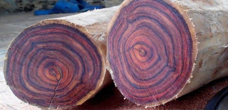 Gỗ sưa là loại gỗ gì? Có mấy loại? Loại nào đắt nhất?
