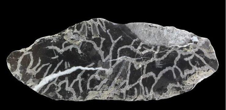 Bạn có biết san hô hóa thạch là gì? Vì sao trang sức san hô có giá trị cao đến vậy?