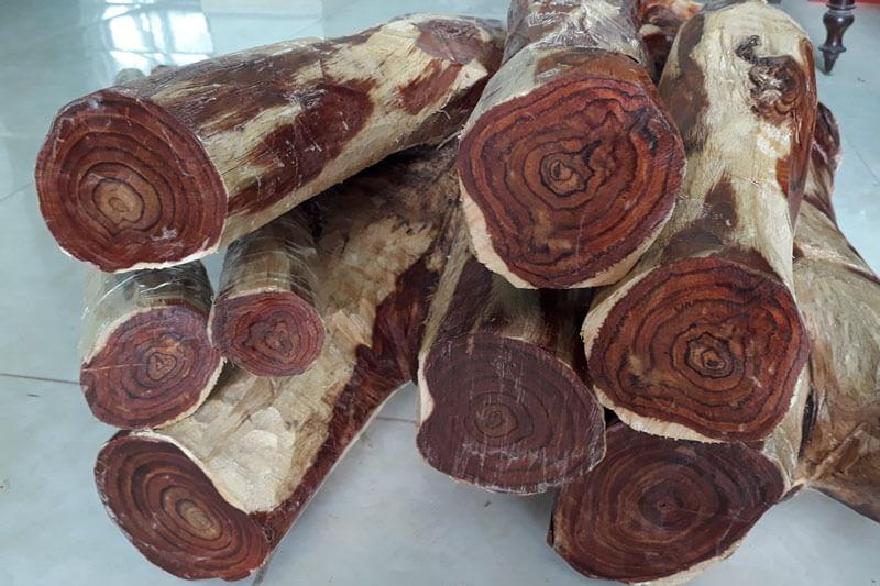 Đặc điểm của gỗ Sưa Đỏ